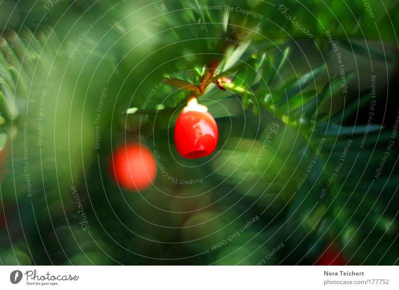 Rotkäppchen Farbfoto Gedeckte Farben mehrfarbig Außenaufnahme Nahaufnahme Detailaufnahme Makroaufnahme Experiment Menschenleer Tag Licht Schatten