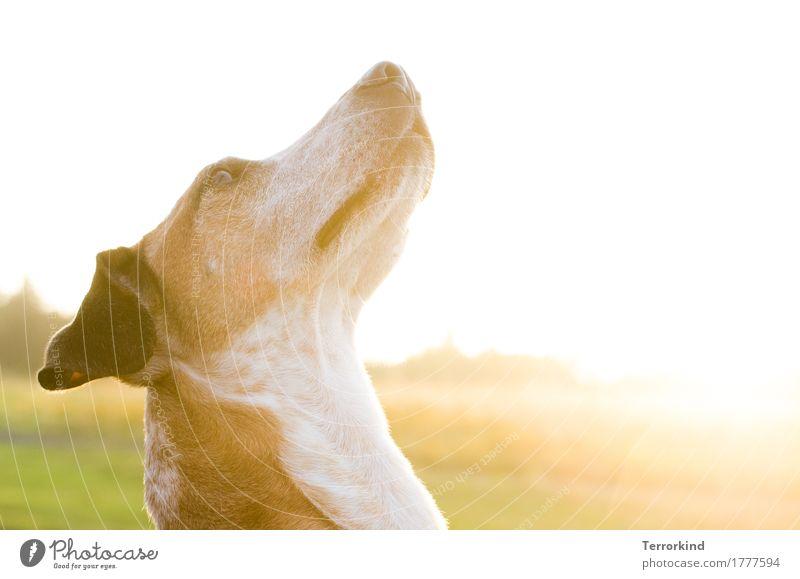 Gegenlichtmiezenjäger Hund schön grün weiß Tier ruhig schwarz gelb braun Freundschaft gold elegant Kommunizieren ästhetisch sitzen Idylle