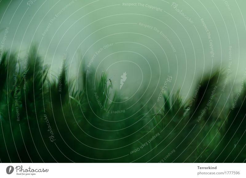 Nahaufnahme einer kleinen Fliege im Moos Insekt Makroaufnahme Tier Flügel Facettenauge grün Natur Wald Detailaufnahme sitzen Beine