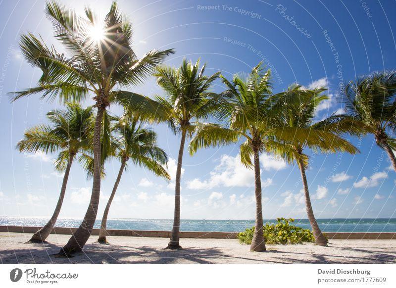 Paradise II Himmel Ferien & Urlaub & Reisen blau Sommer grün weiß Sonne Landschaft Meer Erholung Wolken Ferne Strand Küste Tourismus Ausflug