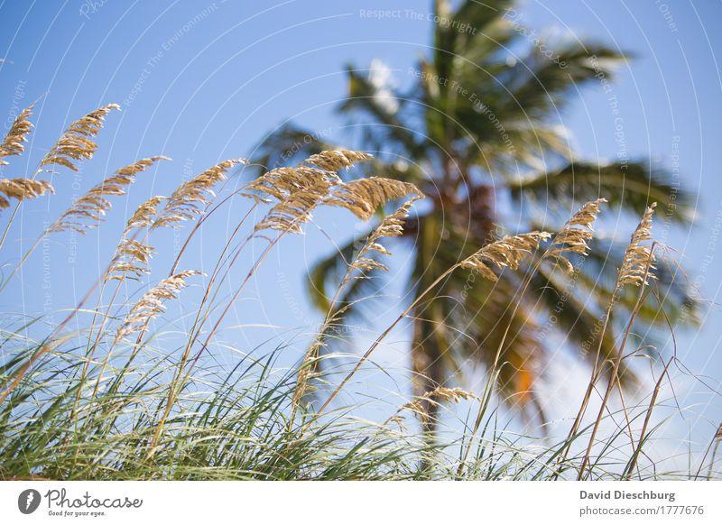 Miami Beach Ferien & Urlaub & Reisen Tourismus Ferne Sommer Sommerurlaub Sonnenbad Strand Meer Insel Wellen Natur Landschaft Wolkenloser Himmel Schönes Wetter