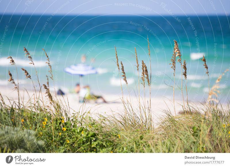 Strandidylle Mensch Ferien & Urlaub & Reisen Pflanze blau Sommer grün Sonne Landschaft Meer Erholung Ferne Gras Küste Tourismus Wellen