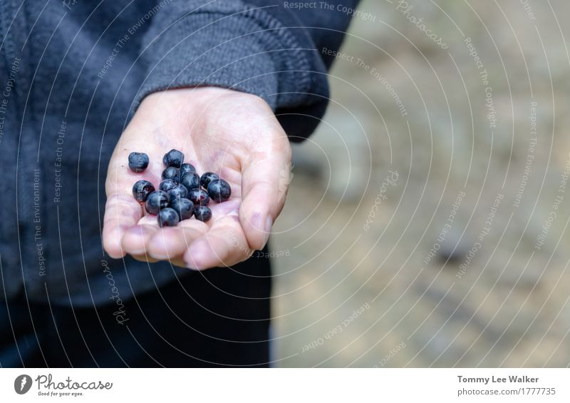 Handverlesene Blaubeeren Mensch Kind Natur blau Sommer schön Gesunde Ernährung Erholung Wald Leben Lifestyle Gesundheit klein Lebensmittel Freiheit