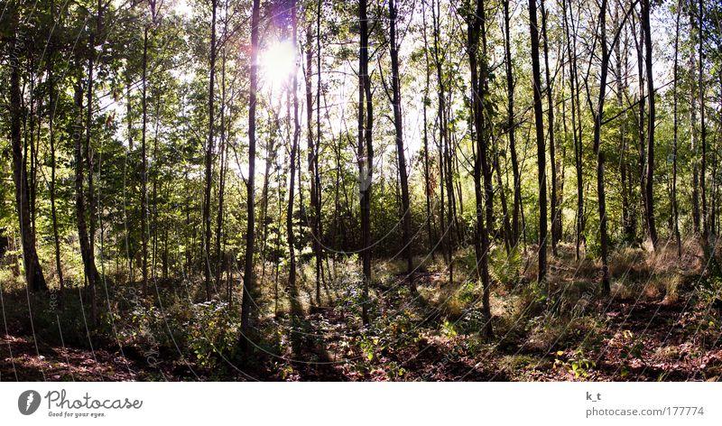 Waldspaziergang Natur grün Baum Sonne Sommer ruhig Umwelt träumen braun Zufriedenheit gehen groß natürlich Warmherzigkeit leuchten
