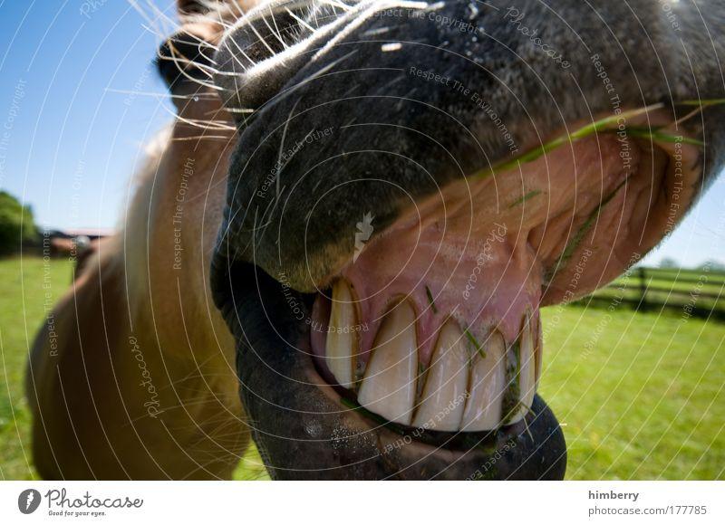 cheese kallejipp Farbfoto Außenaufnahme Tag Licht Totale Weitwinkel Blick Blick in die Kamera Blick nach vorn Natur Landschaft Wiese Feld Tier Nutztier Pferd 1