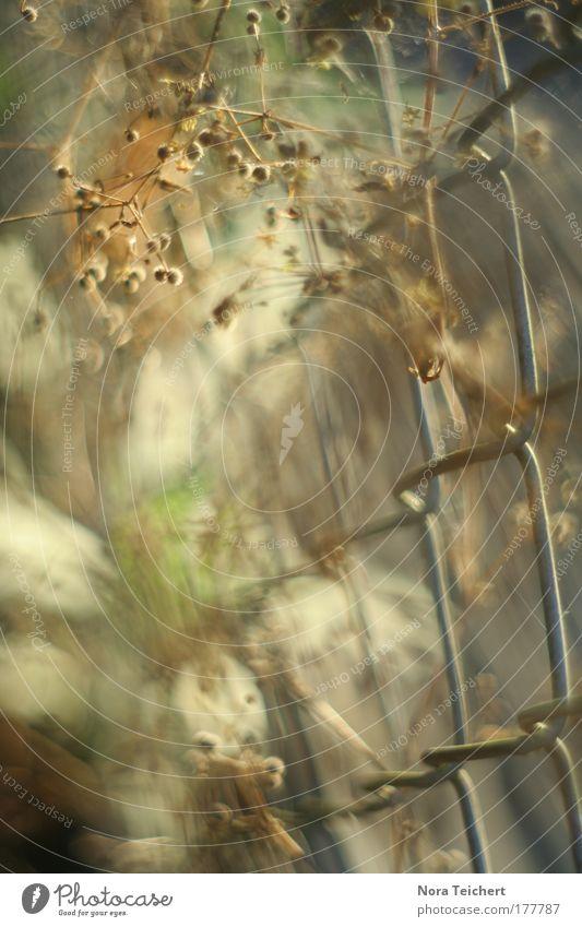 Zauberzaun II Natur Pflanze Sommer Einsamkeit Tier Spielen Umwelt Garten Blüte Bewegung träumen Stimmung Zeit verrückt Zukunft Sträucher