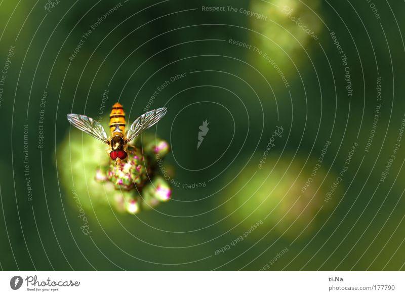 Oscar ruht sich aus Natur schön grün Pflanze Tier Erholung Wiese Park Landschaft Feld warten Fliege elegant Umwelt frei ästhetisch