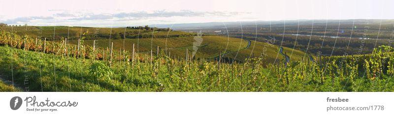 herbst Sonne grün Herbst Landschaft Wein Spaziergang Pflanze Abendsonne