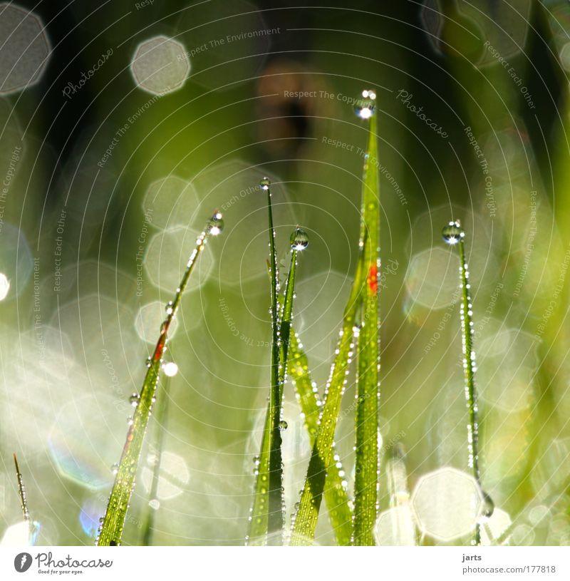 licht Natur Wasser schön grün Pflanze Sommer ruhig Wiese Gras Zufriedenheit hell Feld glänzend Wassertropfen frisch ästhetisch