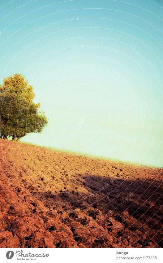 rusticus studiosus Natur grün Baum Umwelt Landschaft Horizont braun Erde Feld ästhetisch Wachstum Boden Wandel & Veränderung Idylle Unendlichkeit Schönes Wetter