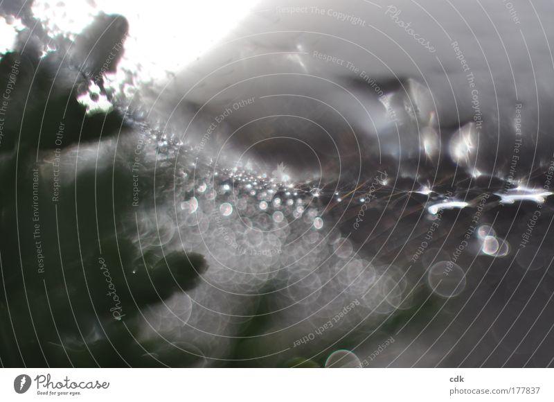 Glitzersuppe Natur Wasser Bewegung grau träumen glänzend Umwelt Wassertropfen Kreis ästhetisch Netzwerk Tropfen bedrohlich Netz Vergänglichkeit gruselig