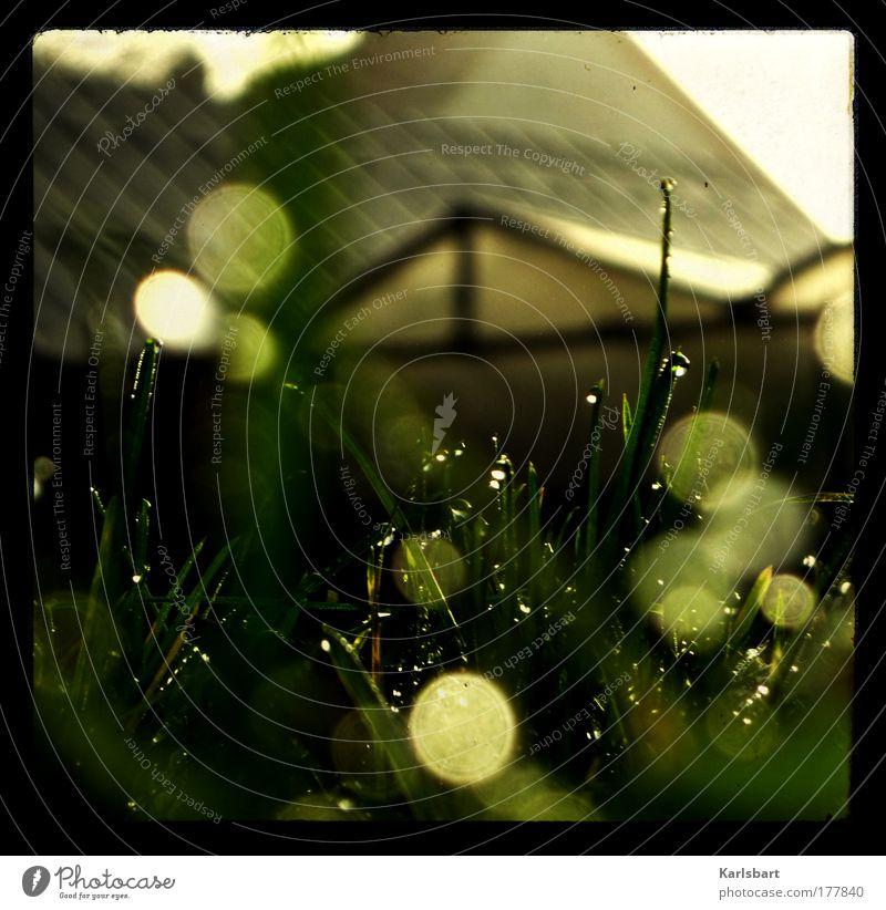 grünes. licht. Design Umwelt Natur Pflanze Wasser Wassertropfen Sonnenlicht Frühling Sommer Klima Schönes Wetter Gras Grünpflanze Dach frisch glänzend hell