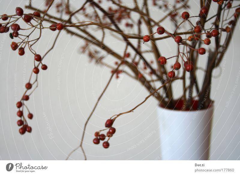Hiffenzweig Pflanze rot Stimmung Frucht Romantik Dekoration & Verzierung Häusliches Leben Beeren Vase getrocknet Zweige u. Äste herbstlich