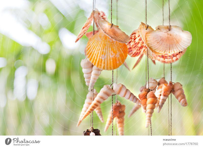Dekoration aus bunten hängenden Muscheln. Natur grün gelb Dekoration & Verzierung Seil Objektfotografie Souvenir erhängen Muschelschale