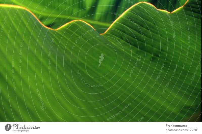 Grueneblattwelle grün Blatt Wellen Oberfläche