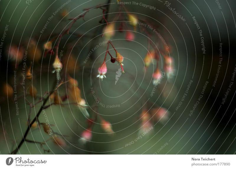 Glöckchen am Waldesrand Natur Pflanze Sommer Freude Tier Umwelt Landschaft Wiese Herbst Glück träumen Stimmung Tanzen rosa glänzend außergewöhnlich