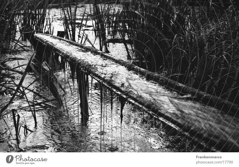Teichrinne Wasser Wassertropfen trist Schilfrohr Teich Pflanze Wasserrinne