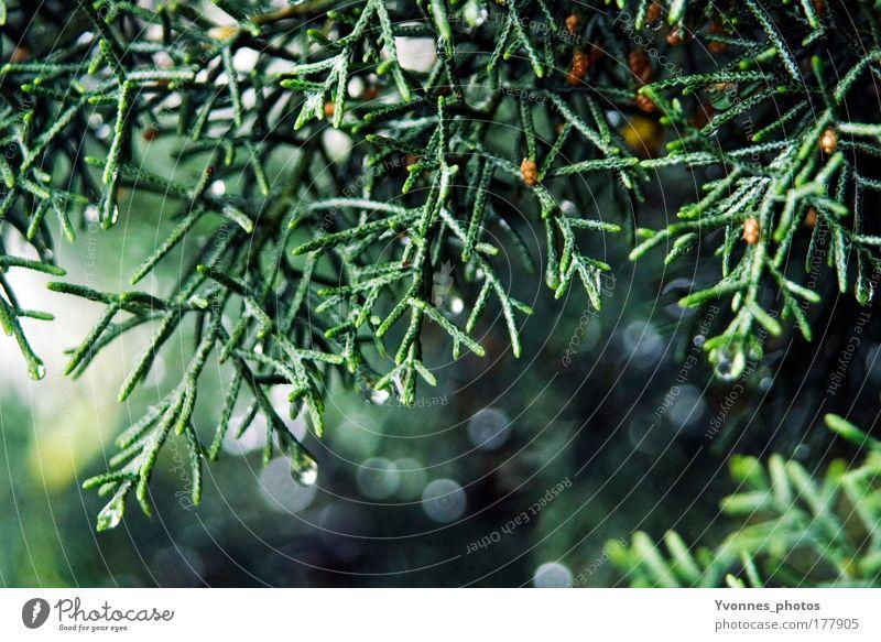 Sparkling Tree Farbfoto Außenaufnahme Licht Lichterscheinung Sonnenlicht Sonnenstrahlen Gegenlicht Umwelt Natur Landschaft Pflanze Grünpflanze Park Wald