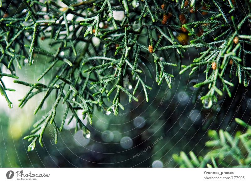 Sparkling Tree Natur blau Pflanze grün schön Landschaft Wald kalt Umwelt glänzend Park leuchten Vergänglichkeit Weihnachtsbaum Tanne bezaubernd