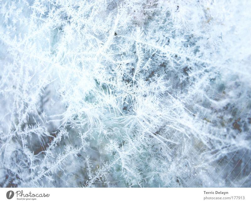 Eisblumen Natur Wasser weiß blau Winter kalt Fenster Detailaufnahme glänzend Glas nass Wachstum Frost Tropfen Häusliches Leben