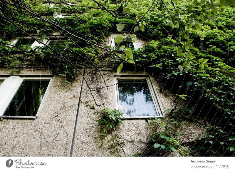 Wohnen im Grünen Natur grün Baum Pflanze Einsamkeit Haus Fenster Wand Architektur grau Gebäude Mauer Traurigkeit Fassade Beton