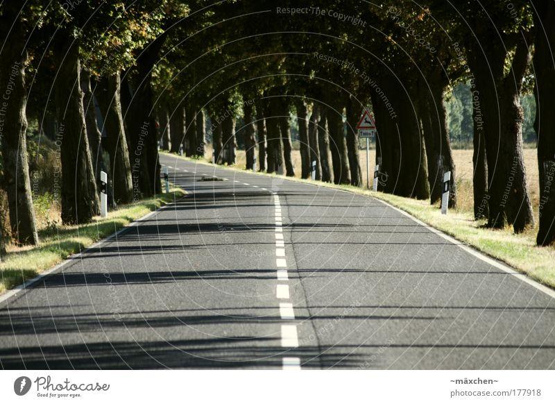 Landstrasse Natur weiß grün Baum rot Sonne Sommer schwarz gelb Straße Umwelt grau Bewegung Wege & Pfade braun Feld