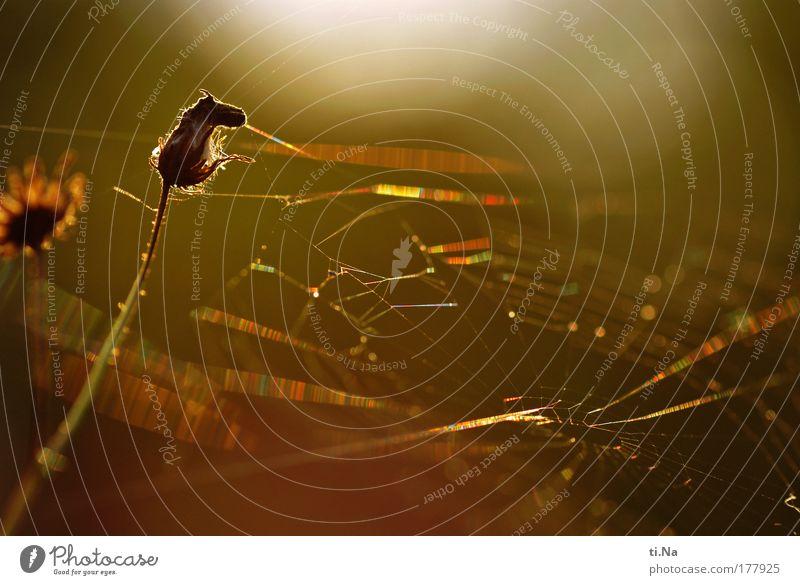 Herbstanfang Farbfoto Außenaufnahme Nahaufnahme Makroaufnahme Menschenleer Textfreiraum oben Abend Licht Schatten Kontrast Silhouette Reflexion & Spiegelung