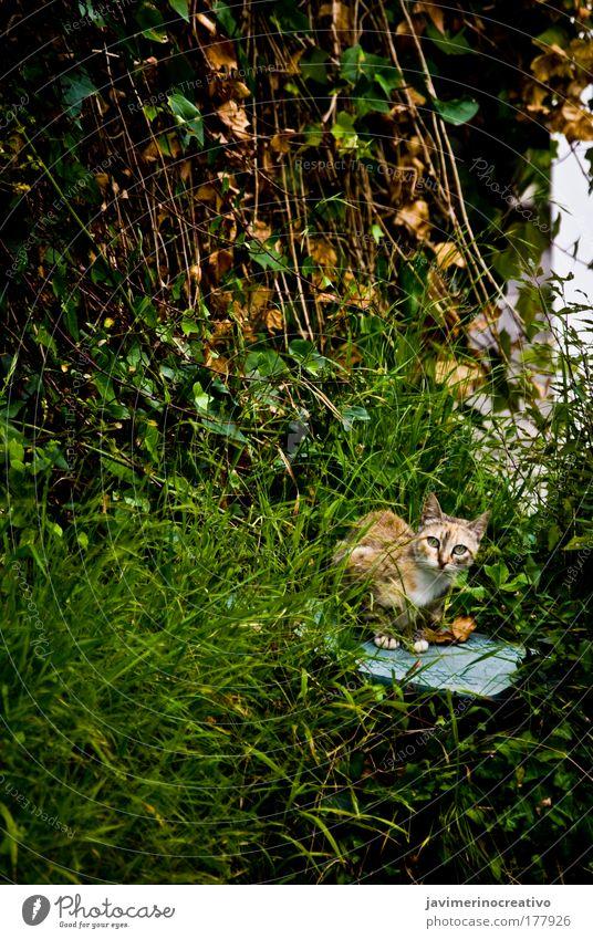 Bastet Farbfoto Außenaufnahme Pflanze Gras Garten Katze grün freilebend Hauskatze Herumtreiben Blick in die Kamera beobachten achtsam Wachsamkeit Tag