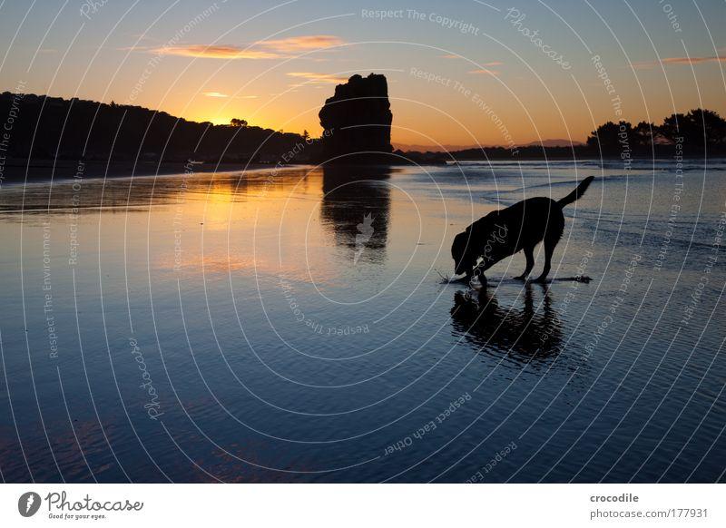 schatzsuche Natur Himmel Meer Freude Winter Strand Wolken Tier Bewegung träumen Hund Sand Landschaft Zufriedenheit Küste Umwelt