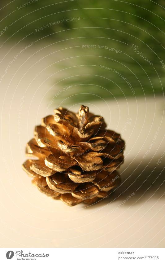 weihnachtlich golden Weihnachten & Advent grün schön ruhig Wärme klein braun Stimmung glänzend Häusliches Leben Dekoration & Verzierung ästhetisch Kitsch