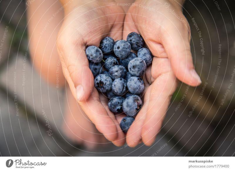 frische bio blaubeeren ernte Lebensmittel Frucht Blaubeeren ansammeln Ernte Ernährung Essen Bioprodukte Vegetarische Ernährung Diät Fasten Slowfood Fingerfood