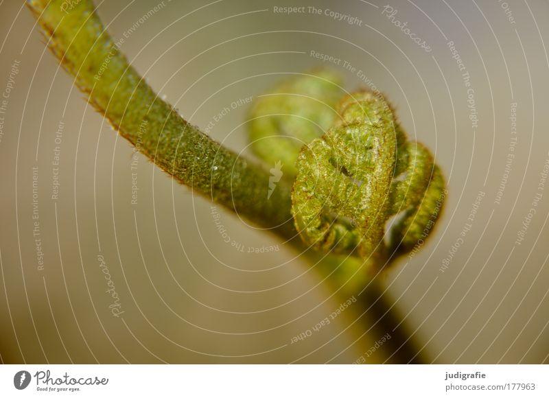 Farn Natur grün Pflanze Sommer Blatt Umwelt Kraft natürlich ästhetisch Wachstum Stengel Farn