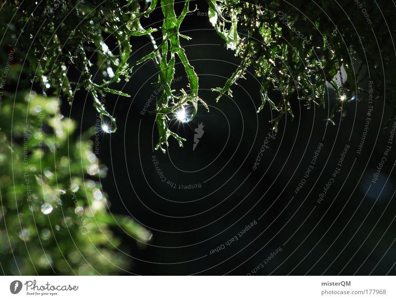 Small World. Natur Wasser grün Pflanze ruhig Umwelt dunkel Regen glänzend Wassertropfen Idylle Tropfen geheimnisvoll feucht Tau Moos