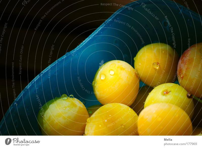 prunus domestica syriaca Farbfoto mehrfarbig Außenaufnahme Textfreiraum links Tag Licht Schatten Lebensmittel Frucht Mirabelle Ernährung Bioprodukte