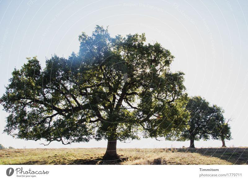Die Wärme spüren. Ferien & Urlaub & Reisen Umwelt Natur Landschaft Pflanze Himmel Sonne Sonnenlicht Sommer Schönes Wetter Baum Gras Frankreich natürlich trocken