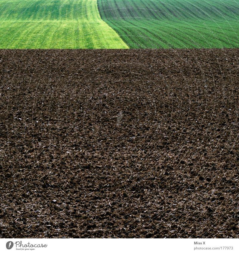 braun grün grün Natur Pflanze Wiese Frühling Landschaft Feld Erde Ausflug modern trist Landwirtschaft Ackerbau Biologische Landwirtschaft Aussaat biologisch