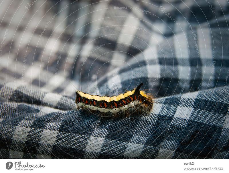 Pfadfinder Raupe 1 Tier kariert Hemd Bewegung krabbeln authentisch klein nah blau mehrfarbig Willensstärke geduldig kuschlig langsam Farbfoto Außenaufnahme