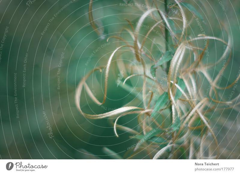 Geschenksband Farbfoto Gedeckte Farben Außenaufnahme Nahaufnahme Detailaufnahme Makroaufnahme Experiment abstrakt Menschenleer Tag Schatten Kontrast Unschärfe