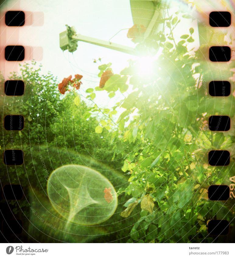 Kosmische Strahlung Unterhaltungselektronik Pflanze Sonne Sommer Schönes Wetter Blume Sträucher Rose Satellitenantenne hell grün rot Energie Filmperforation