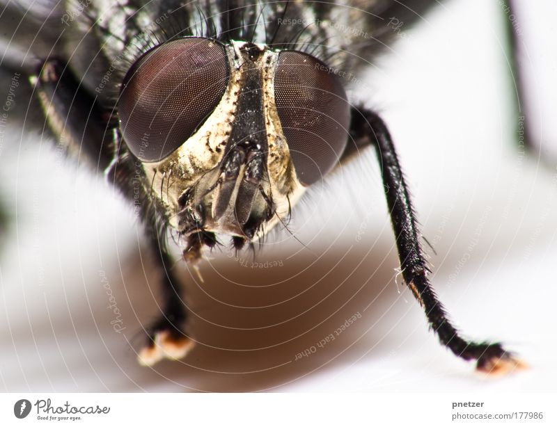 Brachycera Farbfoto Makroaufnahme Textfreiraum unten Starke Tiefenschärfe Froschperspektive Blick in die Kamera Umwelt Natur Tier Wildtier Tiergesicht Flügel