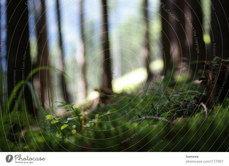 Pilzperspektive Natur Baum grün Pflanze Sommer schwarz Wald Gras Umwelt Erde frisch Wachstum Moos Schönes Wetter saftig nachhaltig