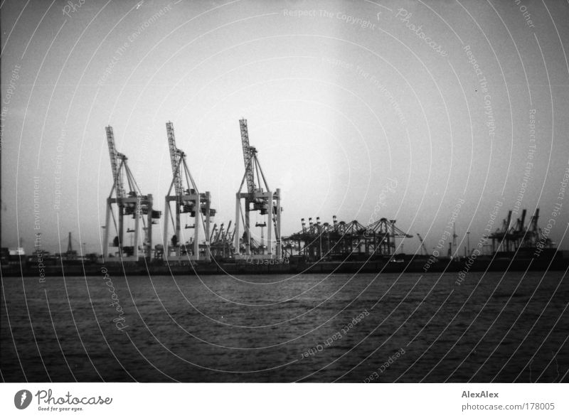 die drei musketiere Stadt Sommer Wasser Hamburg Güterverkehr & Logistik Fluss Hafen Flussufer Schifffahrt Reichtum Handel Kran Industrieanlage Hafenstadt Elbe