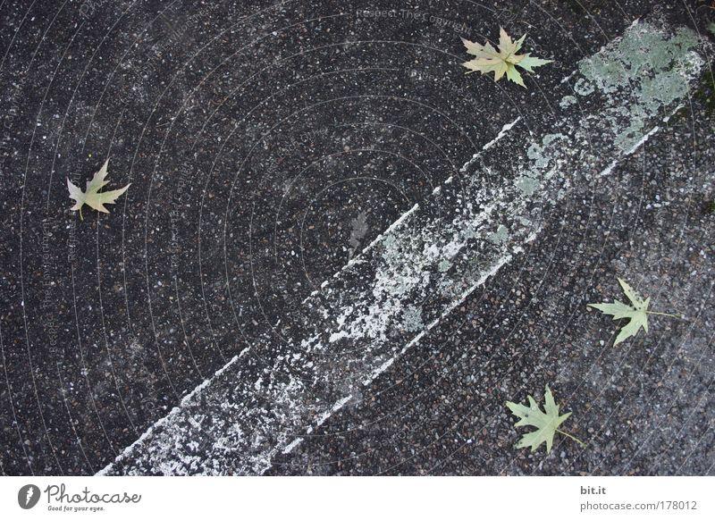 BONJOUR TRISTESSE weiß Blatt schwarz Farbe Straße Umwelt Wege & Pfade Stein Linie Zufriedenheit Schilder & Markierungen Beton Klima trist Streifen fallen