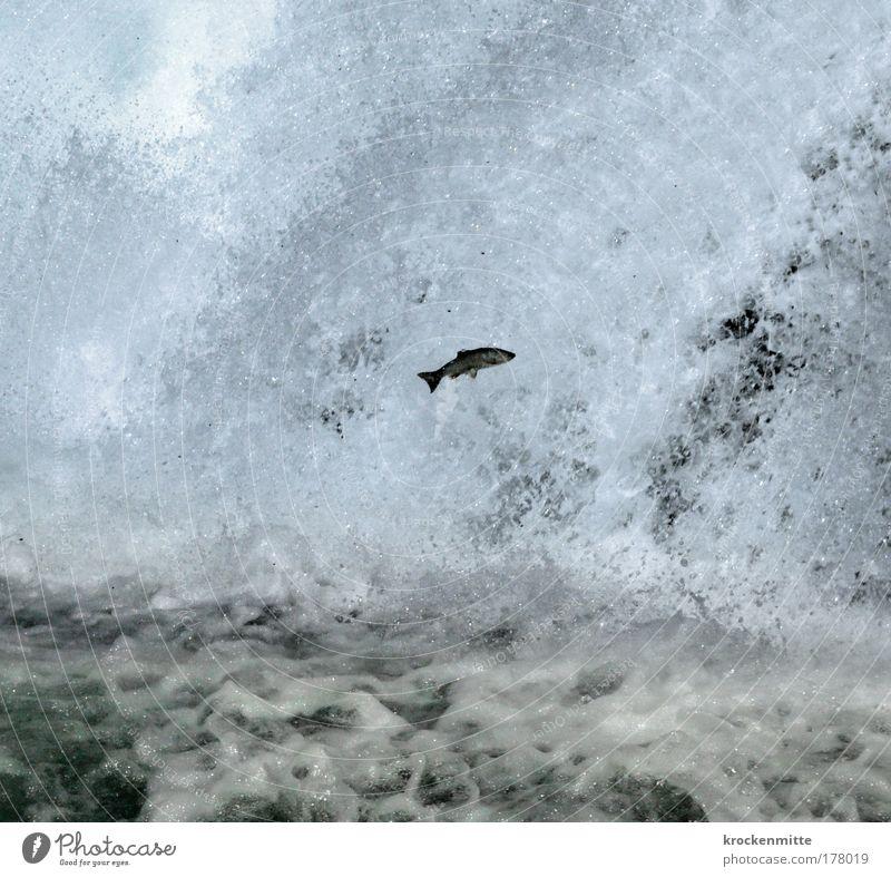 Gegen jede Chance Wasser blau Einsamkeit Tier springen Umwelt fliegen Wassertropfen Fisch Schweiz Mut Europa kämpfen Wasserfall Schaum