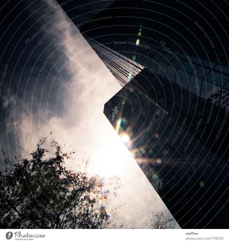 sunshine state blau Stadt Baum Sonne Sommer Wolken Wärme Hochhaus USA Bankgebäude violett Skyline Schönes Wetter Florida Tampa