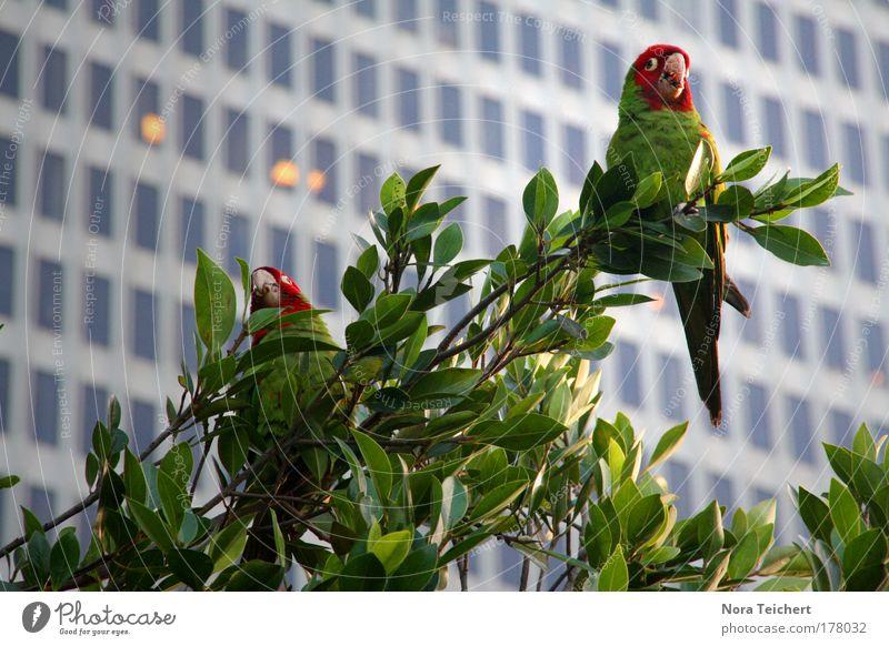 Birds in da city Natur Baum Ferien & Urlaub & Reisen Pflanze Sommer Blatt Tier Haus Fenster Gebäude Park Vogel fliegen Wildtier Hochhaus verrückt