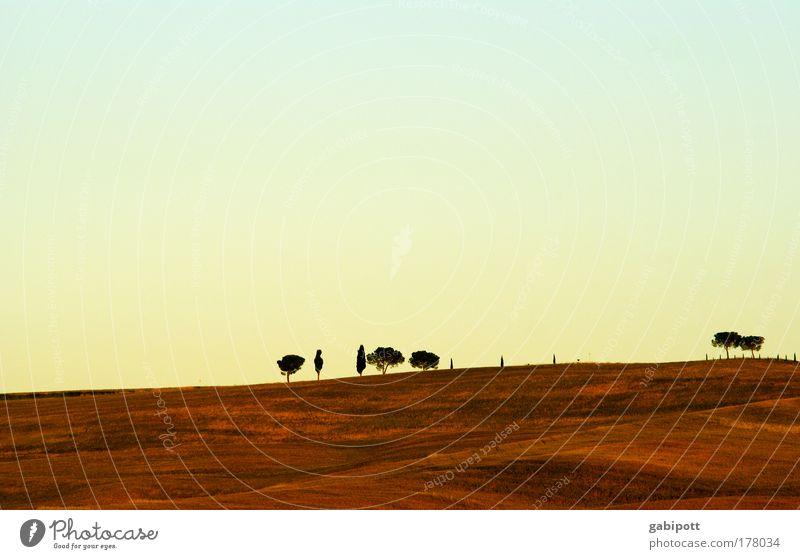 das letzte licht Natur blau schön Sommer Baum Landschaft Umwelt Wärme Herbst braun Horizont Feld Luft Erde gold Lebensfreude