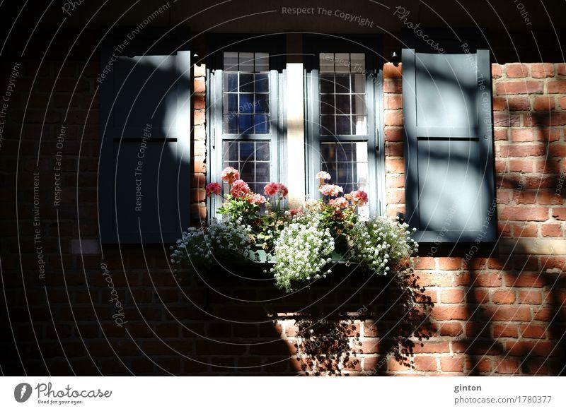 Fachwerkhaus mit Blumenkasten Haus Dekoration & Verzierung Architektur Fassade Backstein alt Blühend glänzend Nostalgie Fenster Bleifenster Holzfenster
