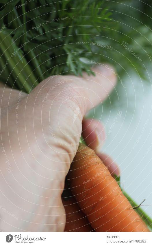 Möhrenernte Natur Pflanze grün Hand Umwelt Leben Lifestyle Gesundheit Garten Lebensmittel orange Feld Ernährung frisch genießen festhalten