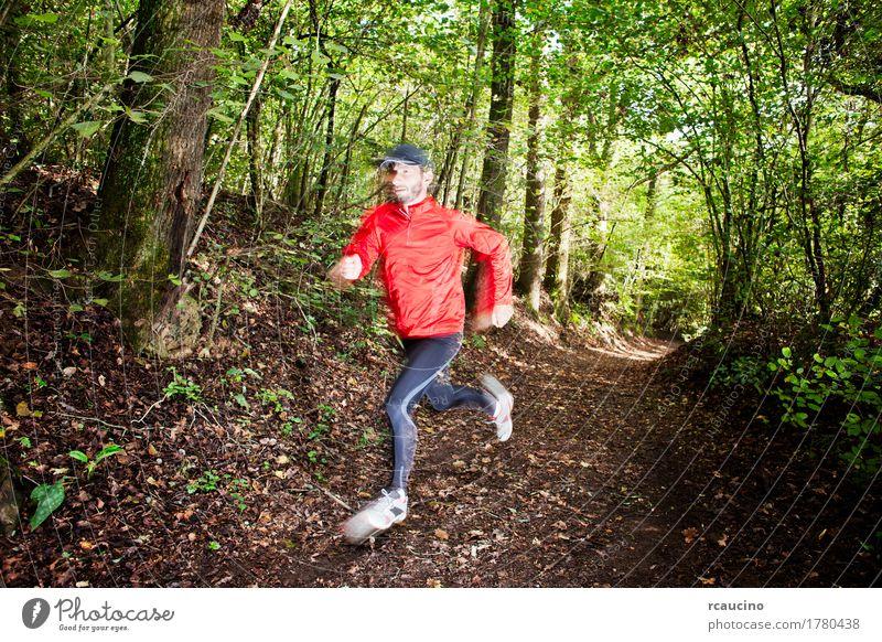 Hinterläufer, der im Wald auf einer Spur läuft Lifestyle Freude Sommer Sport Junge Mann Erwachsene Fuß Pflanze Baum Wege & Pfade Schuhe Bewegung rot schwarz